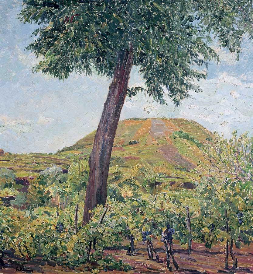 160 Vigneto a Monterosso