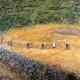 218 Campo di grano