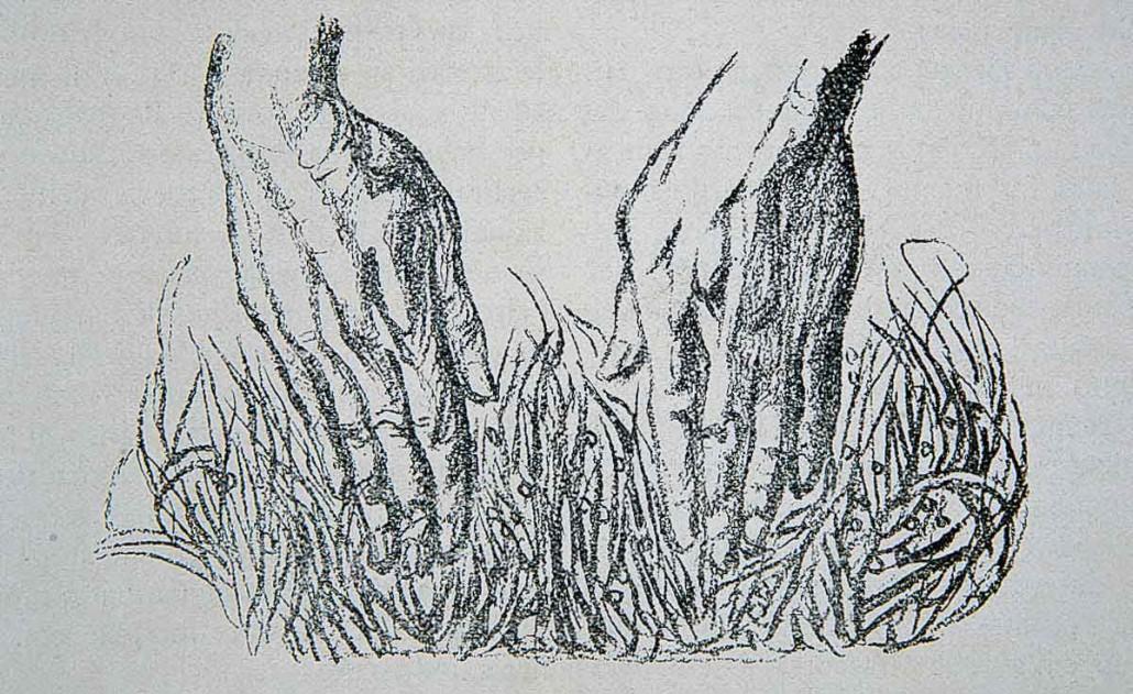 359 Mani nell erba