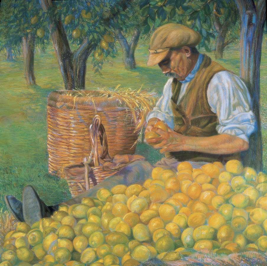 71 Scarto dei limoni